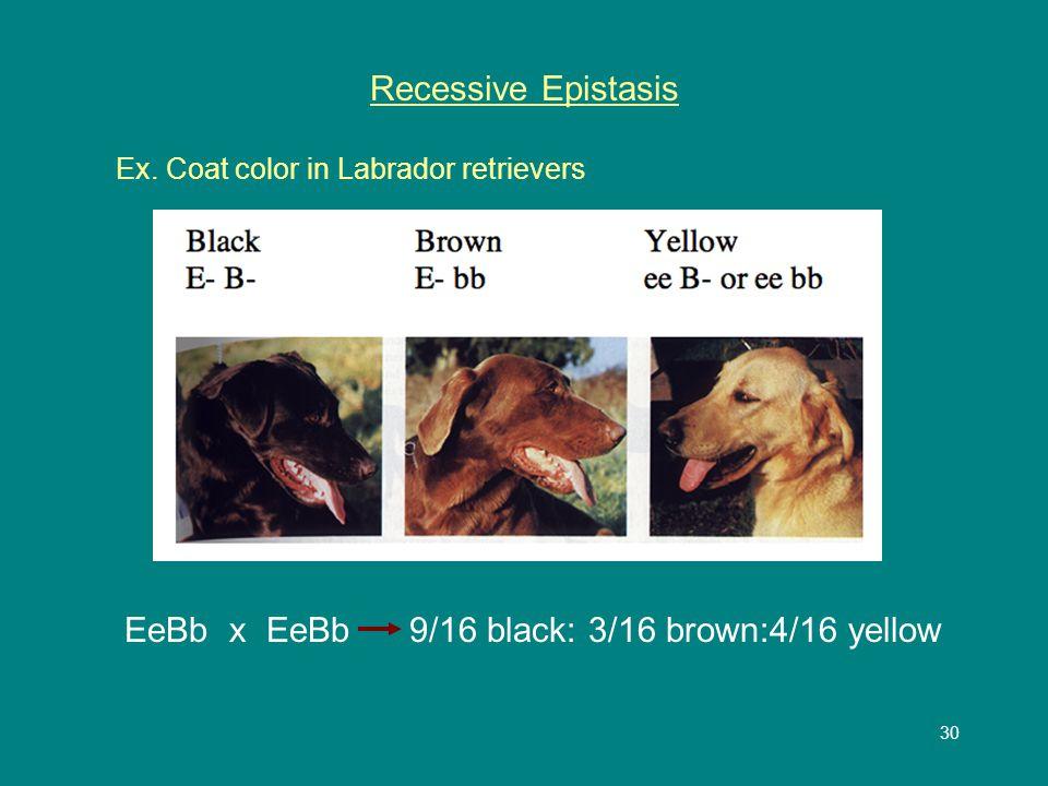 30 Recessive Epistasis Ex.