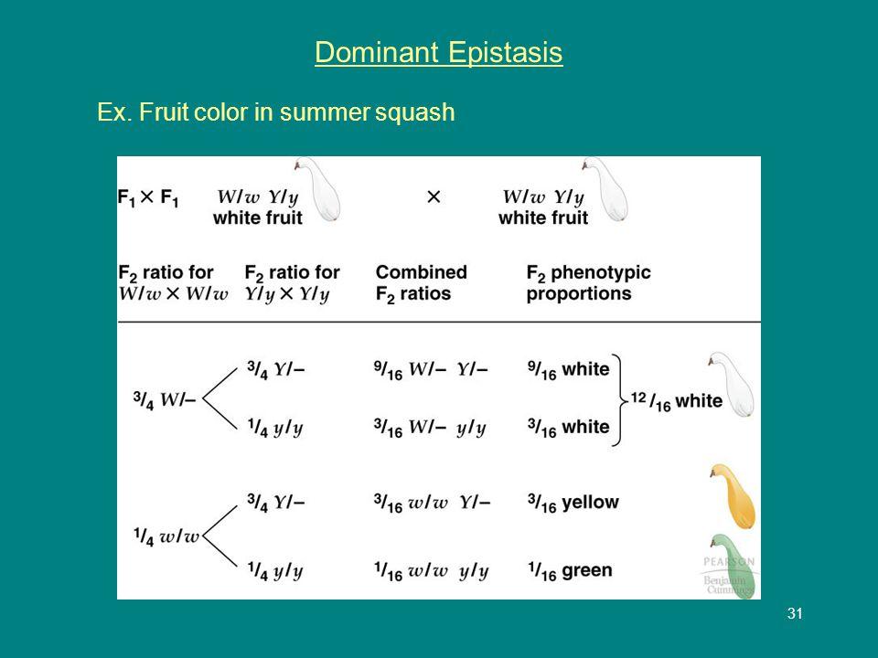 31 Dominant Epistasis Ex. Fruit color in summer squash