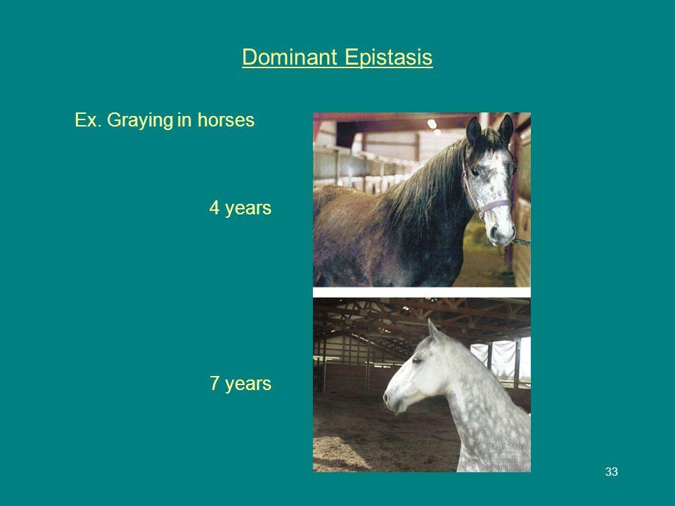 33 Dominant Epistasis Ex. Graying in horses 4 years 7 years