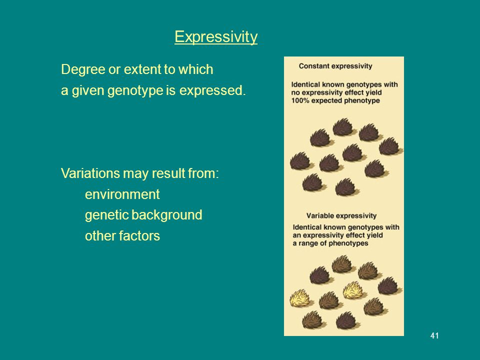 41 Expressivity Degree or extent to which a given genotype is expressed.