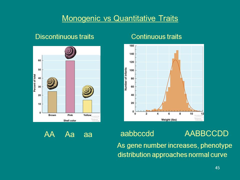 45 Monogenic vs Quantitative Traits Discontinuous traitsContinuous traits AA Aa aa aabbccdd AABBCCDD As gene number increases, phenotype distribution approaches normal curve