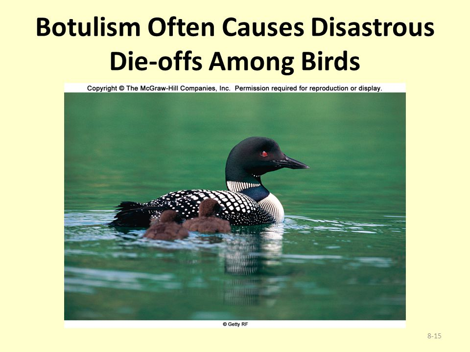 Botulism Often Causes Disastrous Die-offs Among Birds 8-15