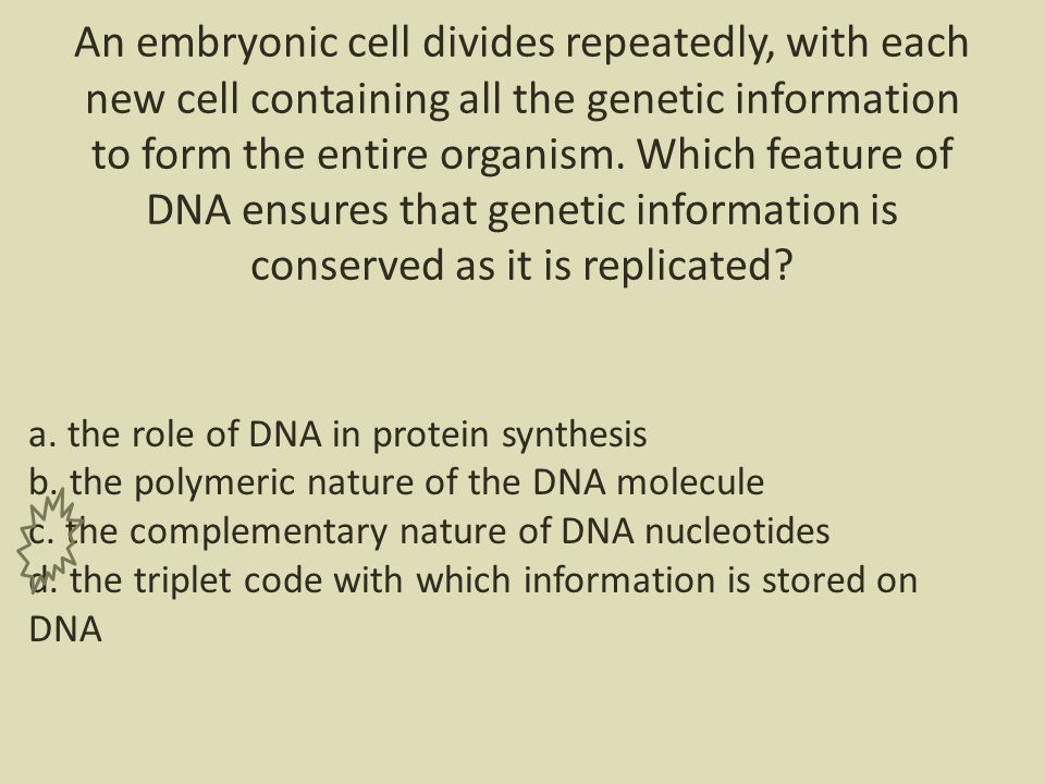 An embryonic cell divides repeatedly, with each new cell containing all the genetic information to form the entire organism.