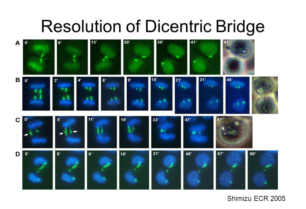 Resolution of Dicentric Bridge Shimizu ECR 2005