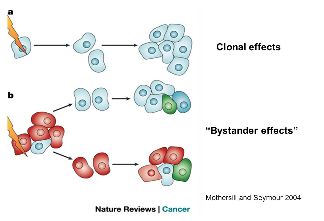 Bystander effects Clonal effects Mothersill and Seymour 2004