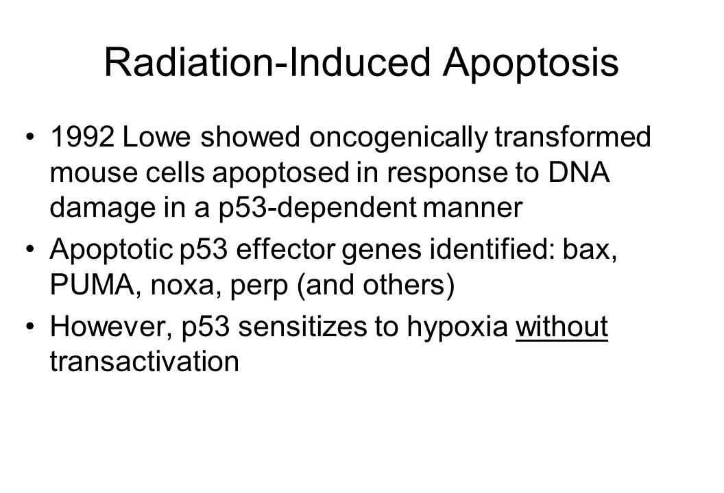 Radiation-Induced Apoptosis 1992 Lowe showed oncogenically transformed mouse cells apoptosed in response to DNA damage in a p53-dependent manner Apoptotic p53 effector genes identified: bax, PUMA, noxa, perp (and others) However, p53 sensitizes to hypoxia without transactivation