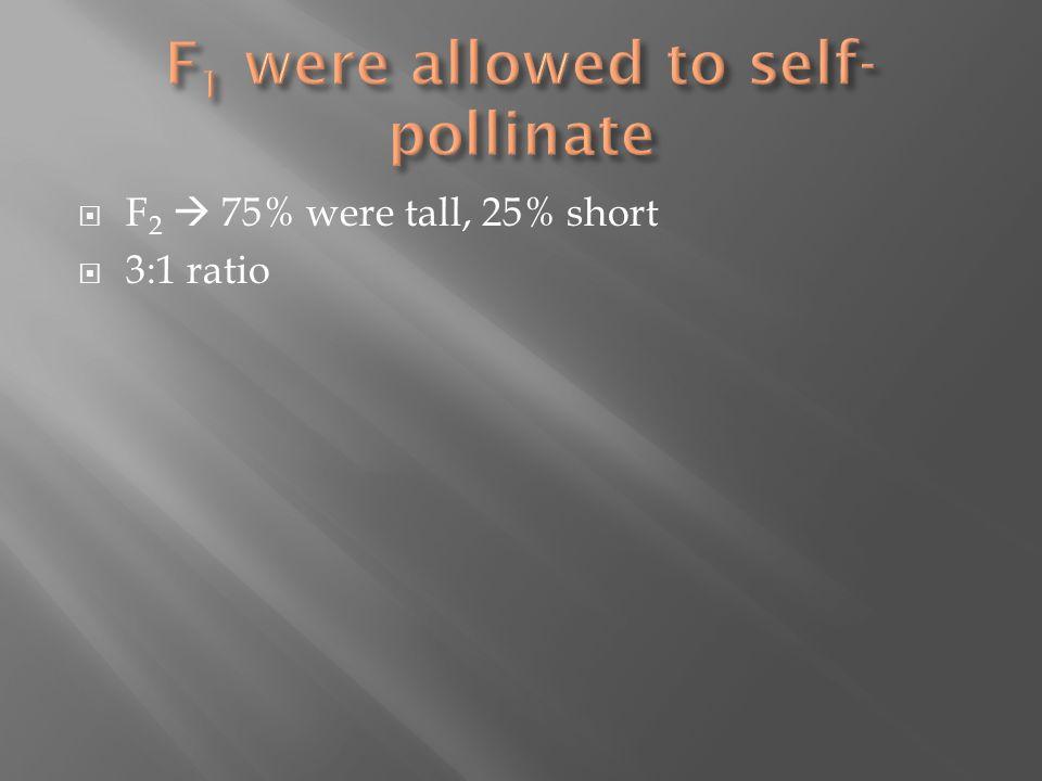  F 2  75% were tall, 25% short  3:1 ratio