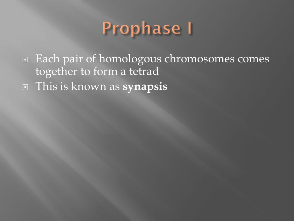  Each pair of homologous chromosomes comes together to form a tetrad  This is known as synapsis