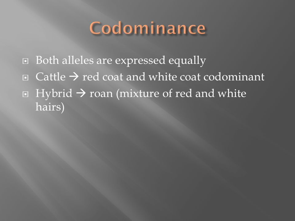  Both alleles are expressed equally  Cattle  red coat and white coat codominant  Hybrid  roan (mixture of red and white hairs)