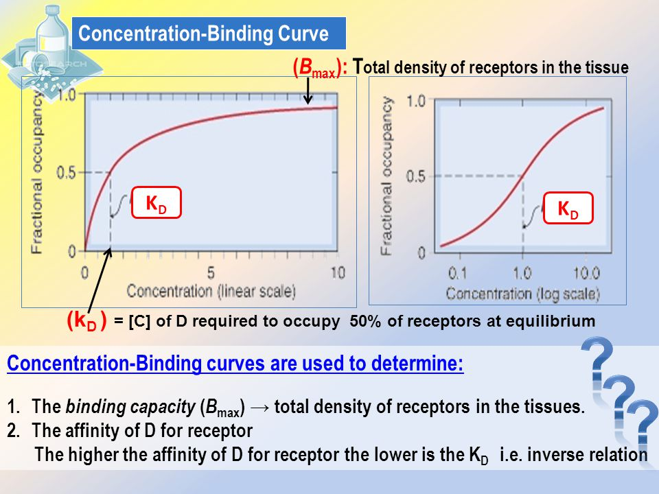 Concentration-Binding Curve KDKD KDKD ( B max ): T otal density of receptors in the tissue Concentration-Binding curves are used to determine: 1.The binding capacity ( B max ) → total density of receptors in the tissues.