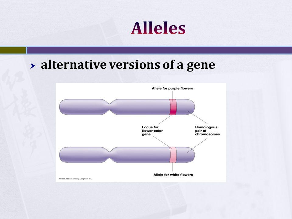  alternative versions of a gene