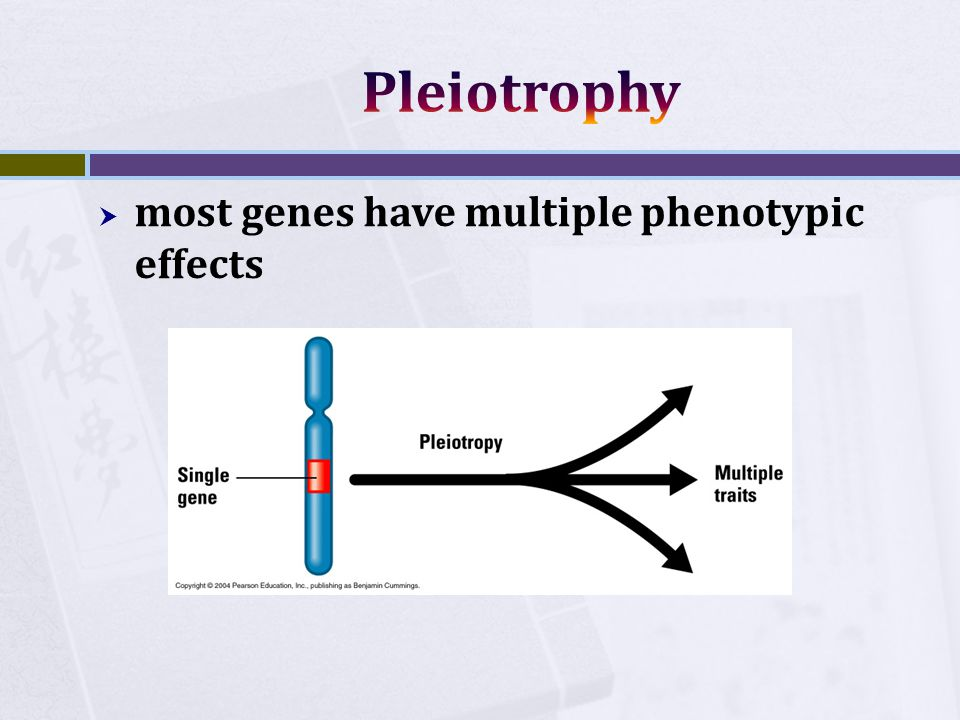  most genes have multiple phenotypic effects