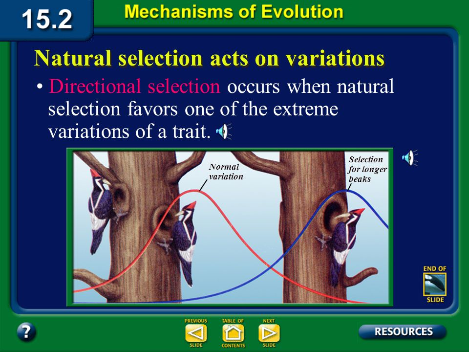 Section 15.2 Summary– pages 404-413 Natural selection acts on variations Directional selection occurs when natural selection favors one of the extreme variations of a trait.