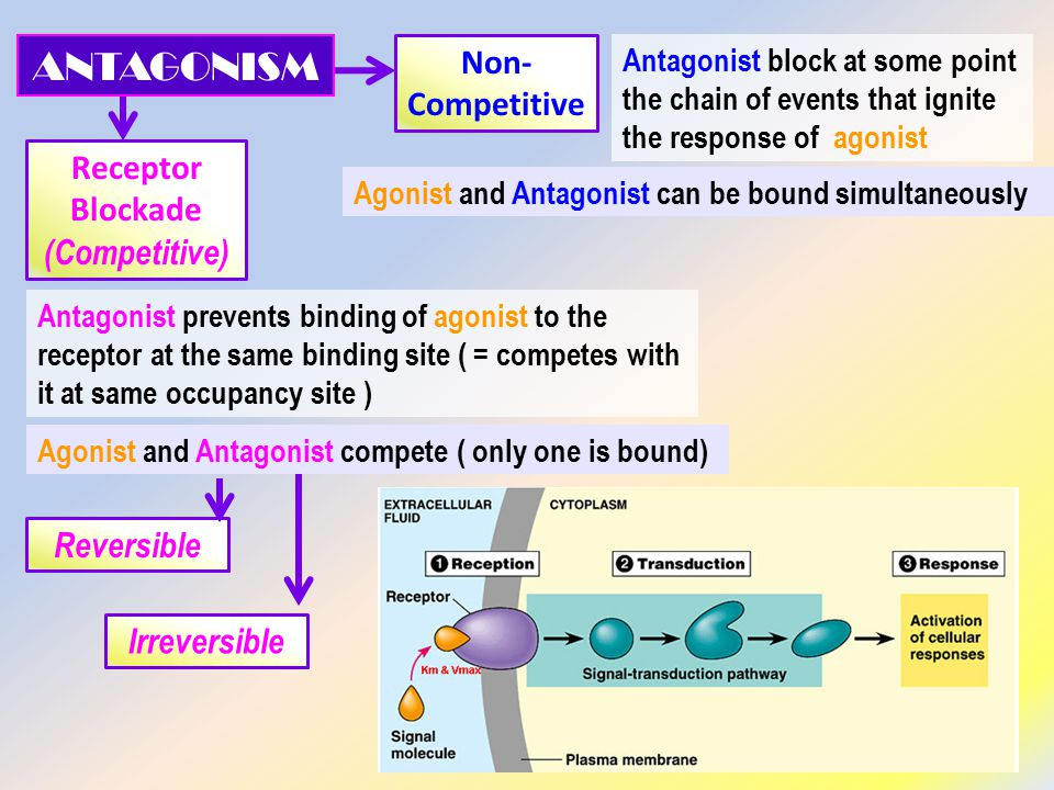 Receptor Blockade (Competitive) Non- Competitive Antagonist prevents binding of agonist to the receptor at the same binding site ( = competes with it at same occupancy site ) Antagonist block at some point the chain of events that ignite the response of agonist Agonist and Antagonist can be bound simultaneously Agonist and Antagonist compete ( only one is bound) ANTAGONISM Irreversible Reversible