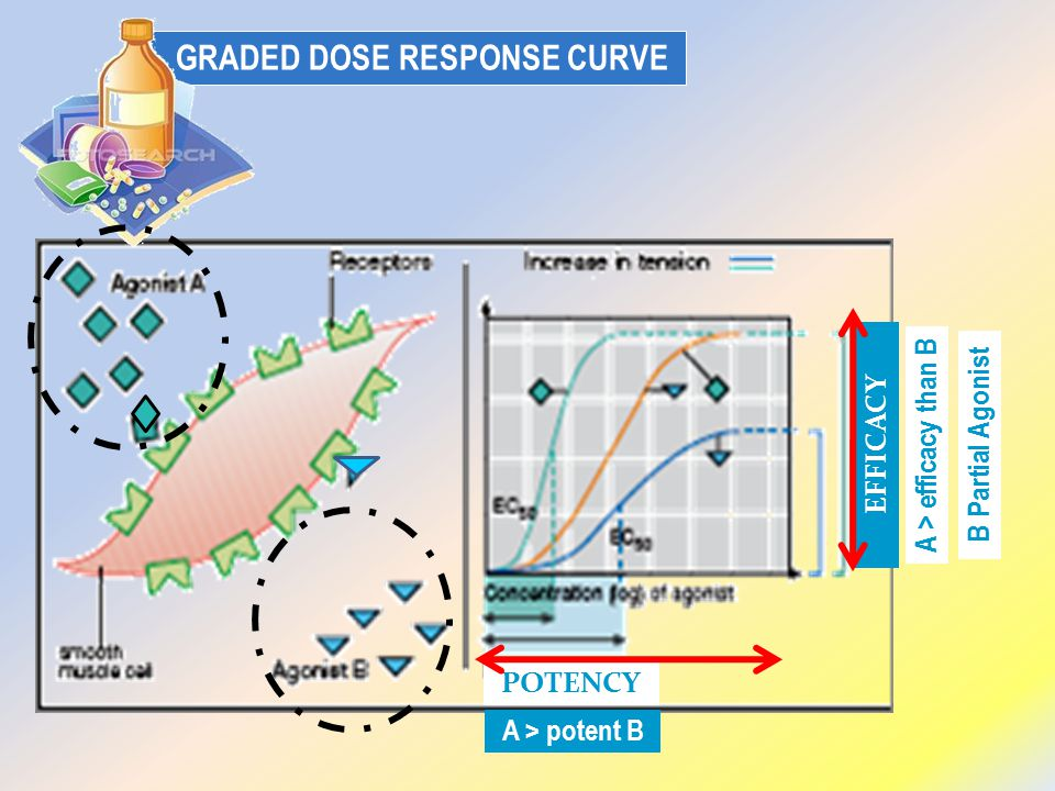 GRADED DOSE RESPONSE CURVE A > efficacy than B B Partial Agonist EFFICACY POTENCY A > potent B