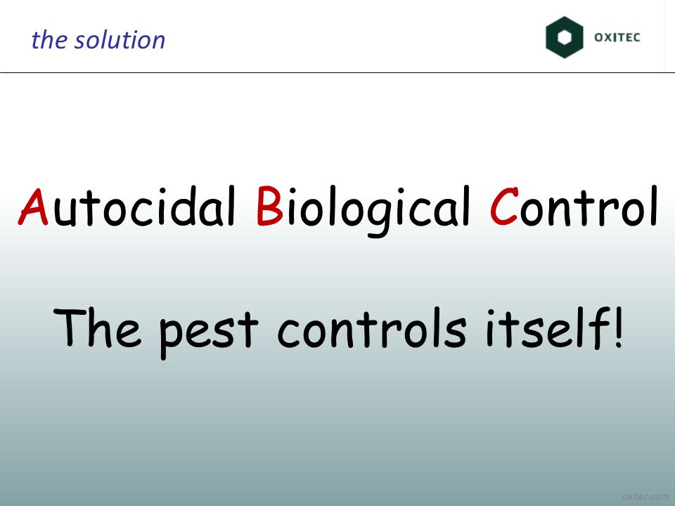 oxitec.com the solution Autocidal Biological Control The pest controls itself!