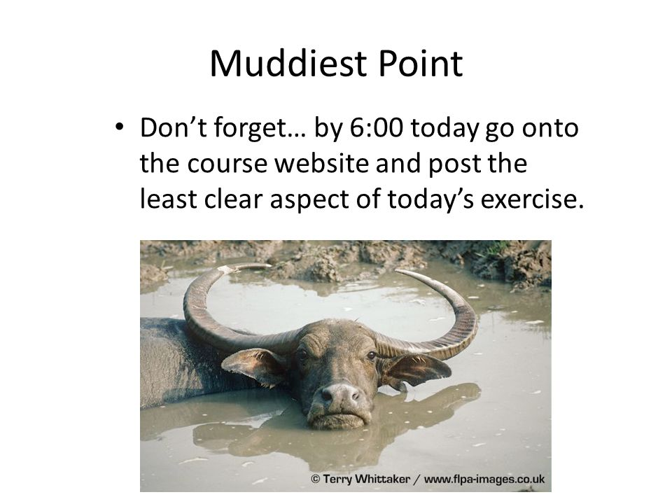 Muddiest Point Don't forget… by 6:00 today go onto the course website and post the least clear aspect of today's exercise.