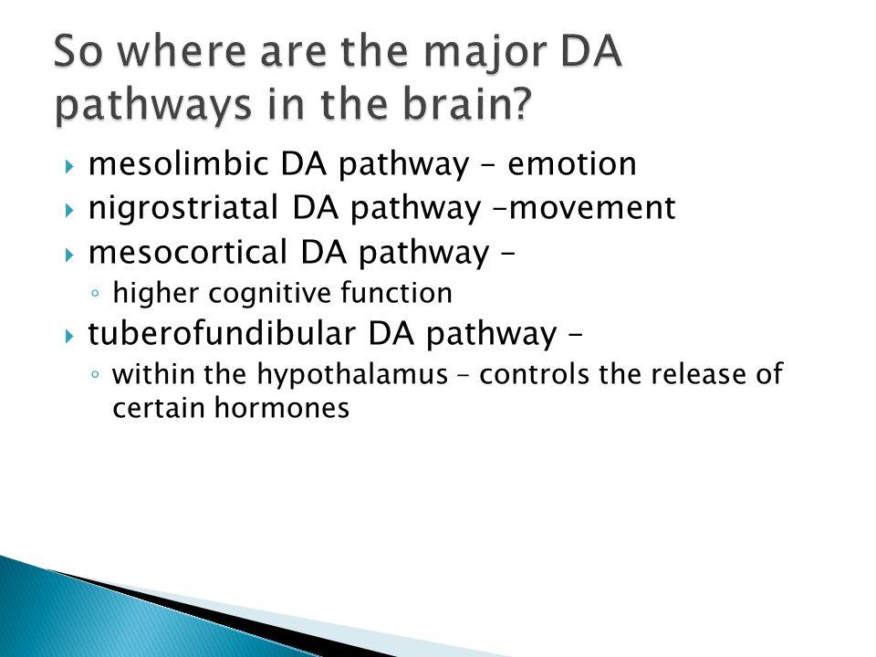  mesolimbic DA pathway – emotion  nigrostriatal DA pathway –movement  mesocortical DA pathway – ◦ higher cognitive function  tuberofundibular DA pathway – ◦ within the hypothalamus – controls the release of certain hormones