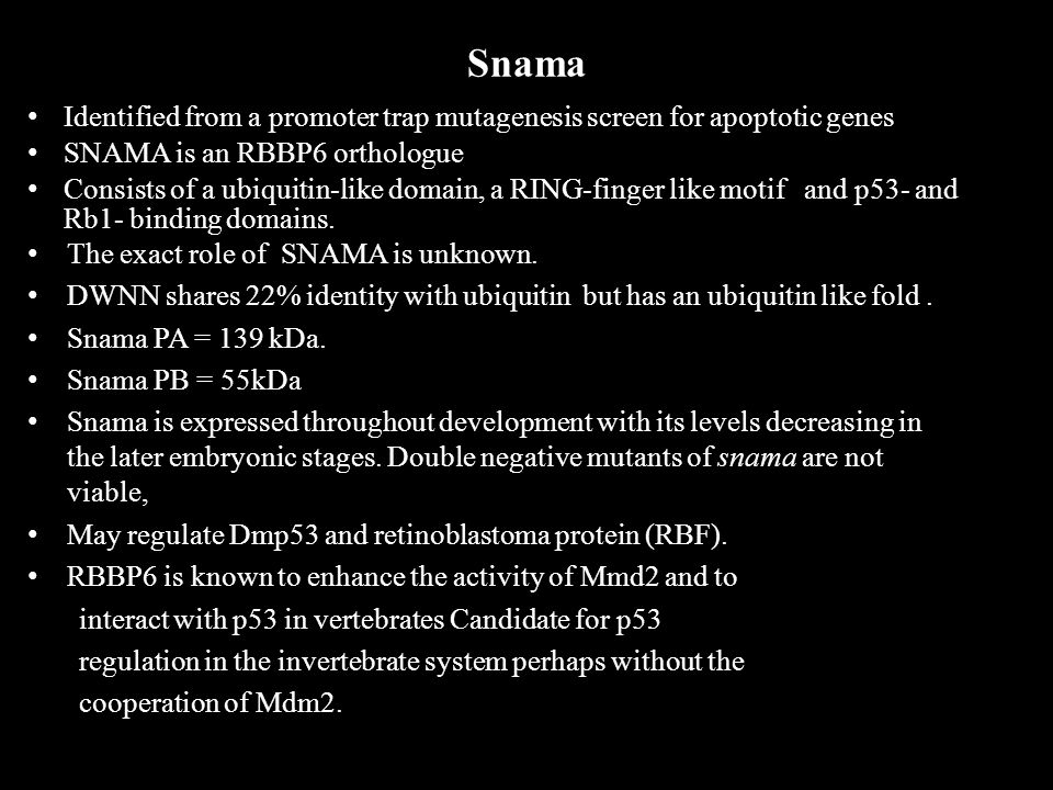Snama Identified from a promoter trap mutagenesis screen for apoptotic genes SNAMA is an RBBP6 orthologue Consists of a ubiquitin-like domain, a RING-finger like motif and p53- and Rb1- binding domains.