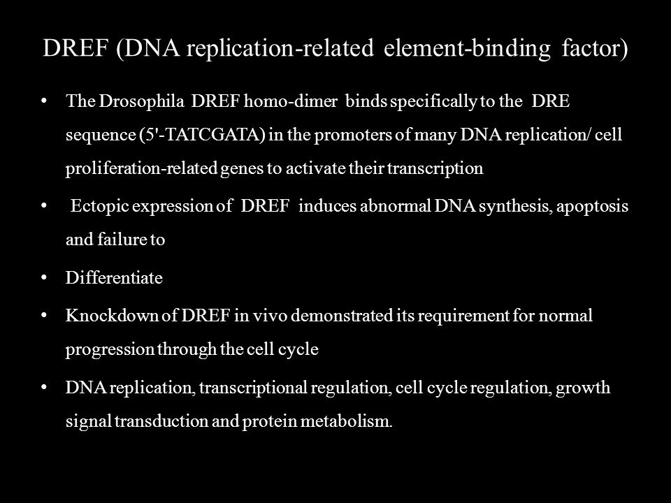 DREF (DNA replication-related element-binding factor) The Drosophila DREF homo-dimer binds specifically to the DRE sequence (5 -TATCGATA) in the promoters of many DNA replication/ cell proliferation-related genes to activate their transcription Ectopic expression of DREF induces abnormal DNA synthesis, apoptosis and failure to Differentiate Knockdown of DREF in vivo demonstrated its requirement for normal progression through the cell cycle DNA replication, transcriptional regulation, cell cycle regulation, growth signal transduction and protein metabolism.