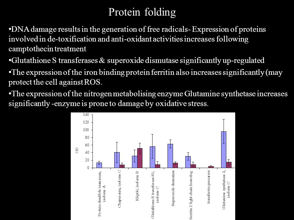 Protein folding DNA damage results in the generation of free radicals- Expression of proteins involved in de-toxification and anti-oxidant activities