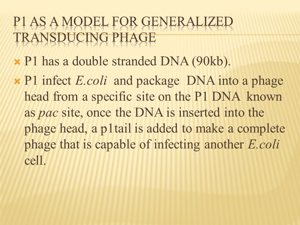  P1 has a double stranded DNA (90kb).