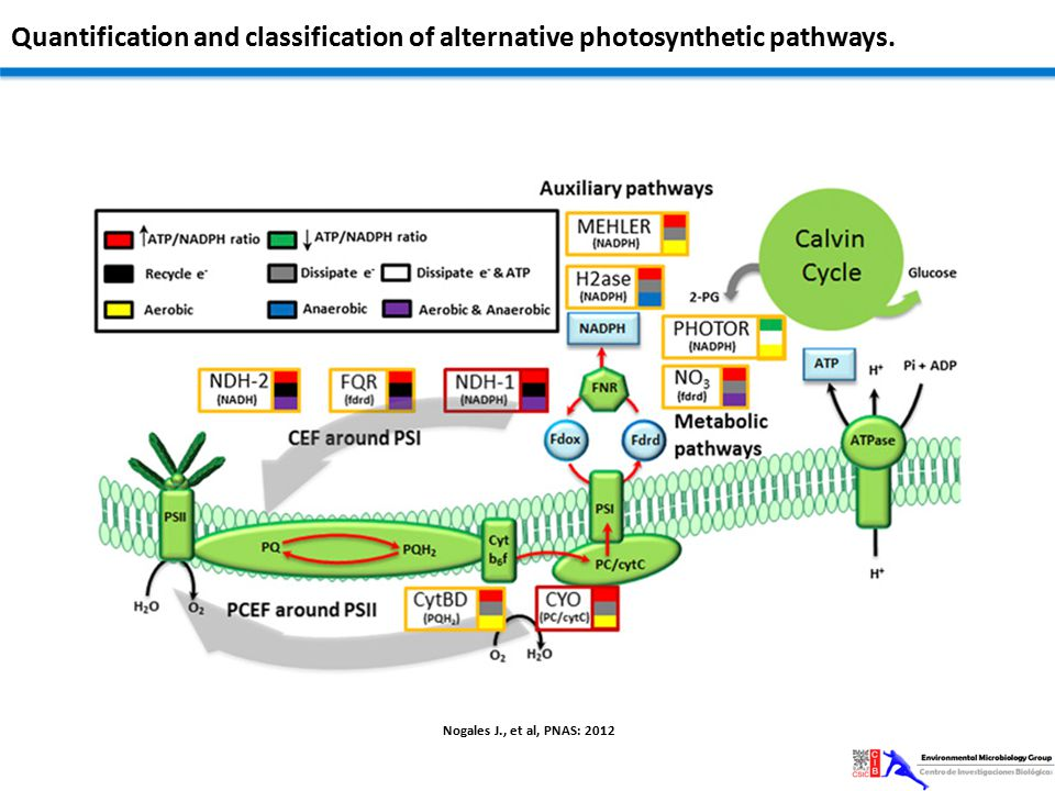 Quantification and classification of alternative photosynthetic pathways.