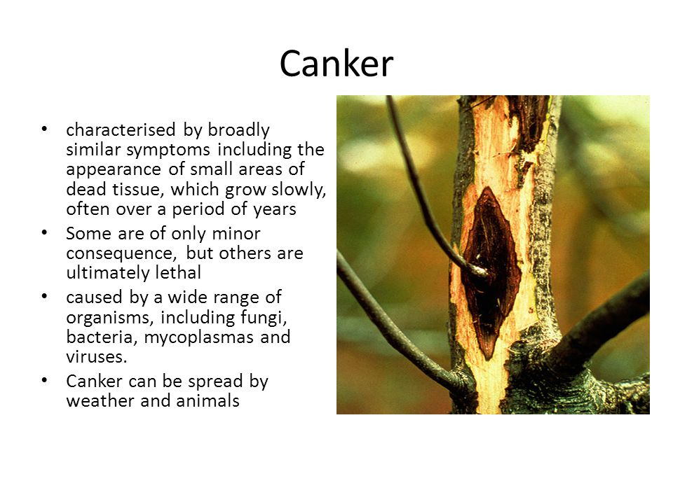 Canker characterised by broadly similar symptoms including the appearance of small areas of dead tissue, which grow slowly, often over a period of yea