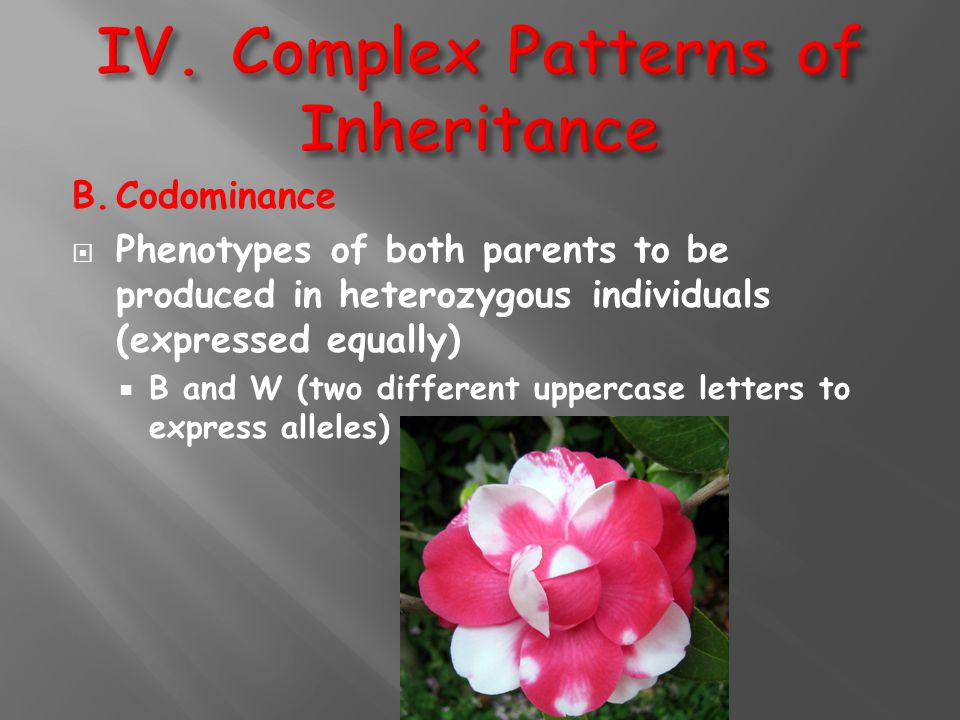 B.Codominance  Phenotypes of both parents to be produced in heterozygous individuals (expressed equally)  B and W (two different uppercase letters t