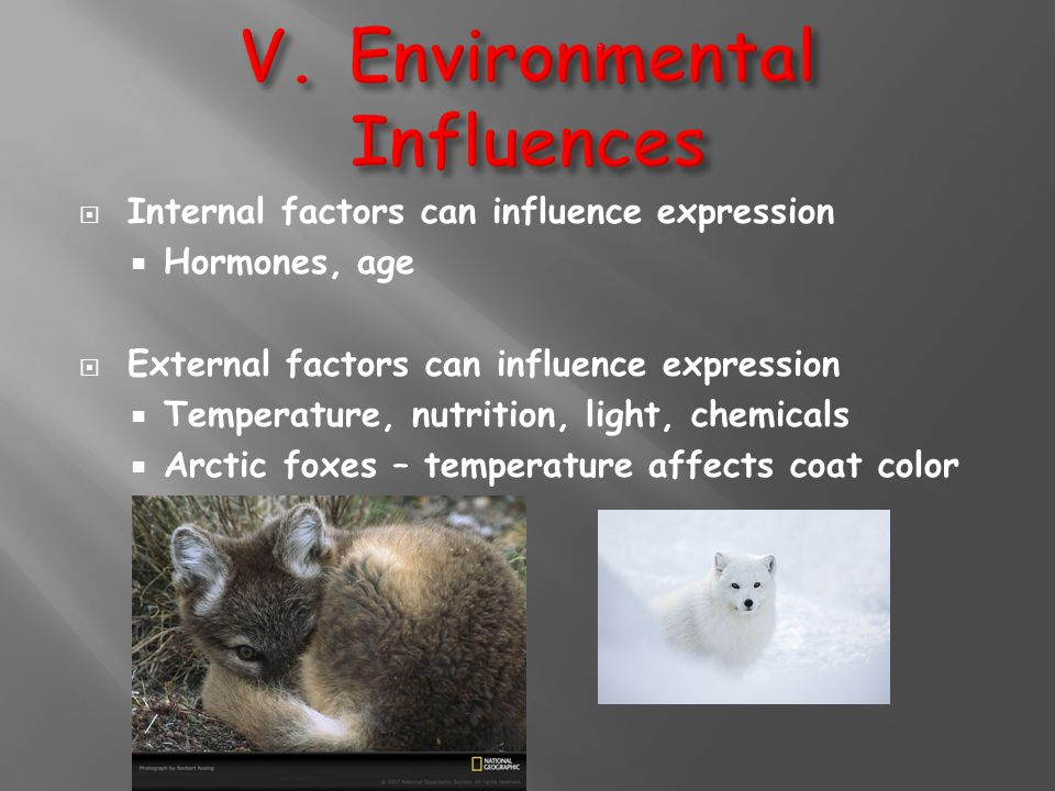  Internal factors can influence expression  Hormones, age  External factors can influence expression  Temperature, nutrition, light, chemicals  A