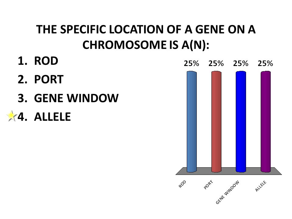 THE SPECIFIC LOCATION OF A GENE ON A CHROMOSOME IS A(N): 1.ROD 2.PORT 3.GENE WINDOW 4.ALLELE