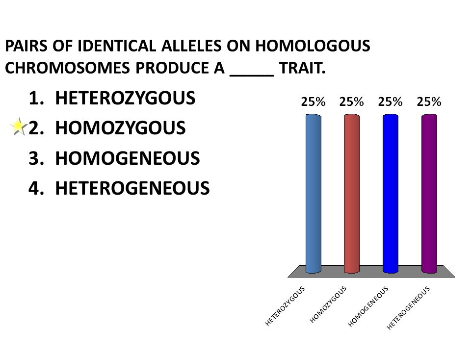 PAIRS OF IDENTICAL ALLELES ON HOMOLOGOUS CHROMOSOMES PRODUCE A _____ TRAIT.