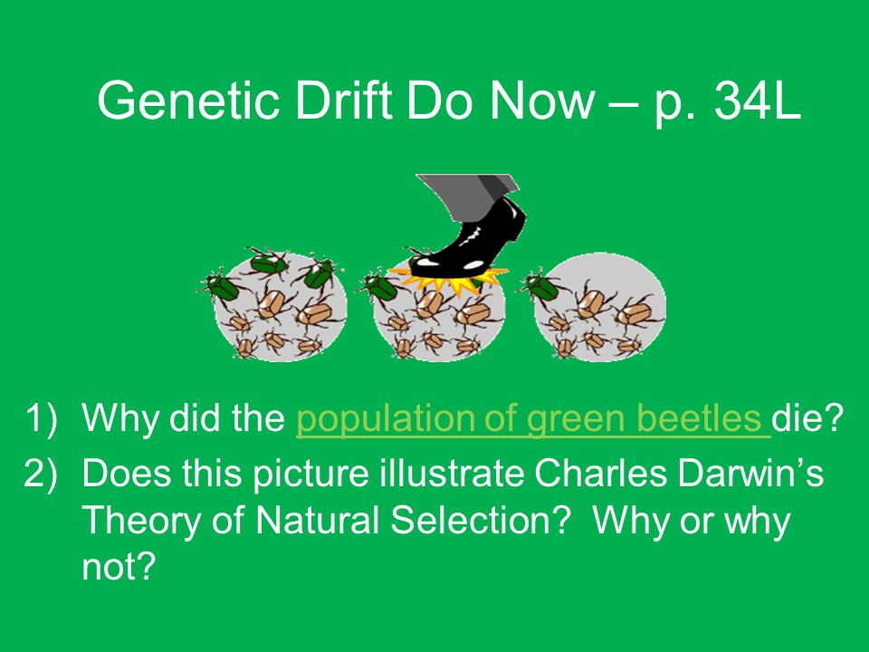 Genetic Drift Do Now – p. 34L 1)Why did the population of green beetles die.