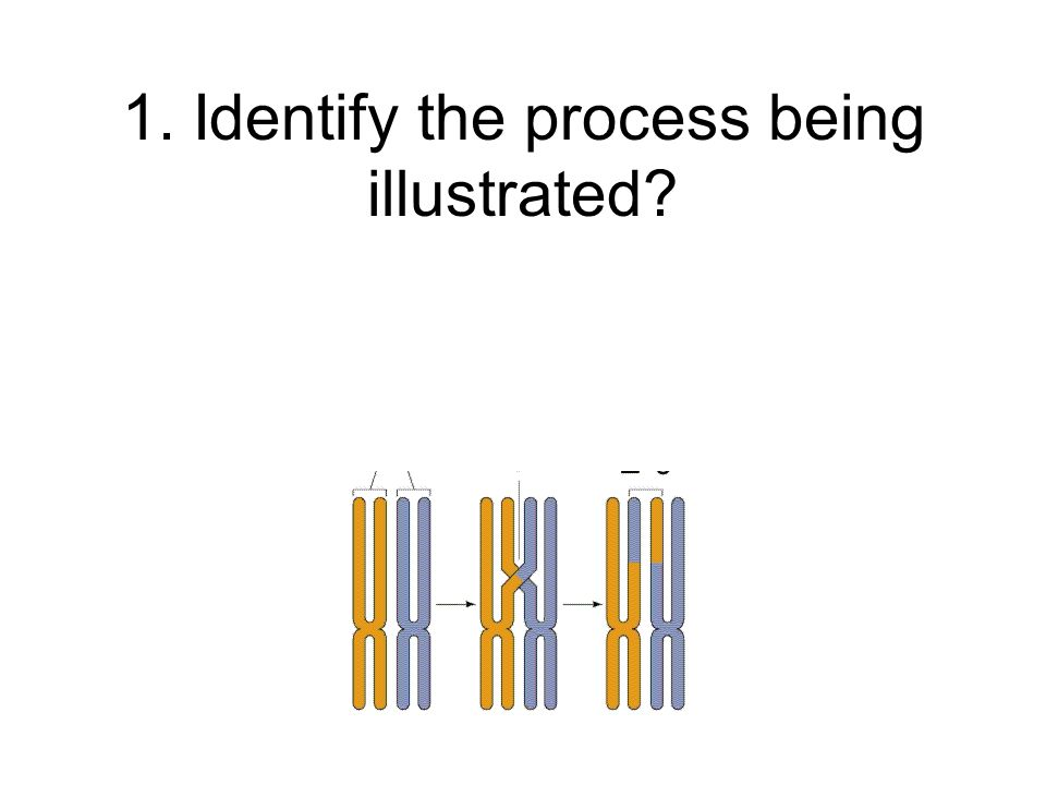 1. Identify the process being illustrated?