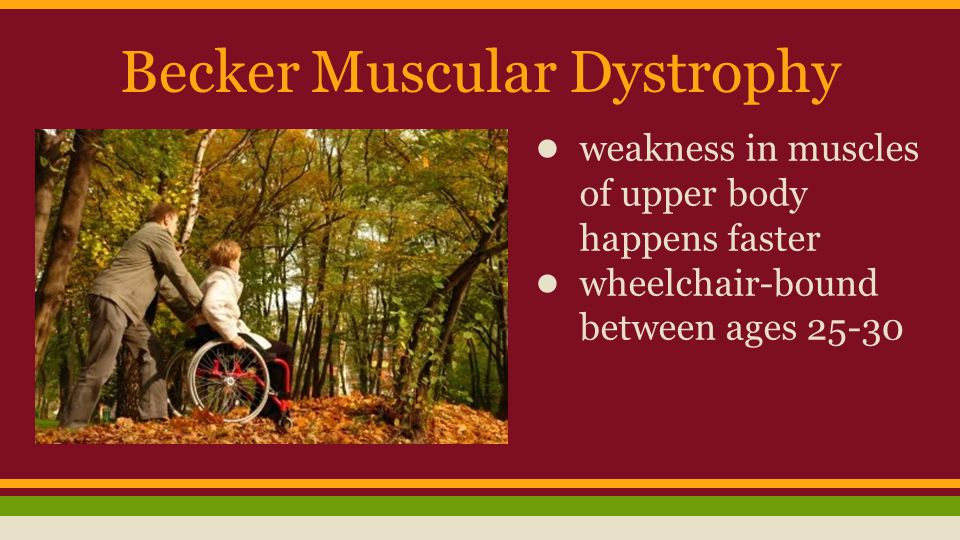 Becker Muscular Dystrophy ● weakness in muscles of upper body happens faster ● wheelchair-bound between ages 25-30