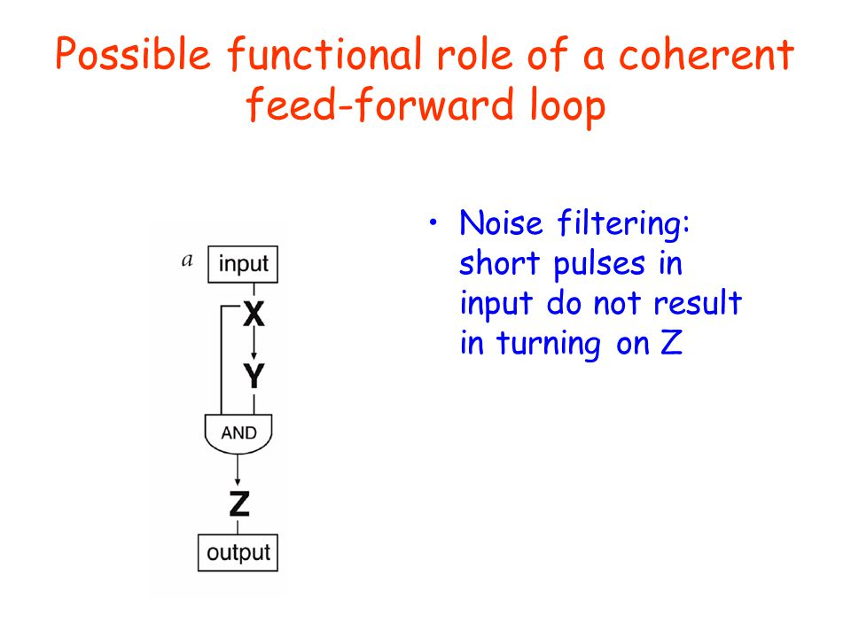 Possible functional role of a coherent feed-forward loop Noise filtering: short pulses in input do not result in turning on Z