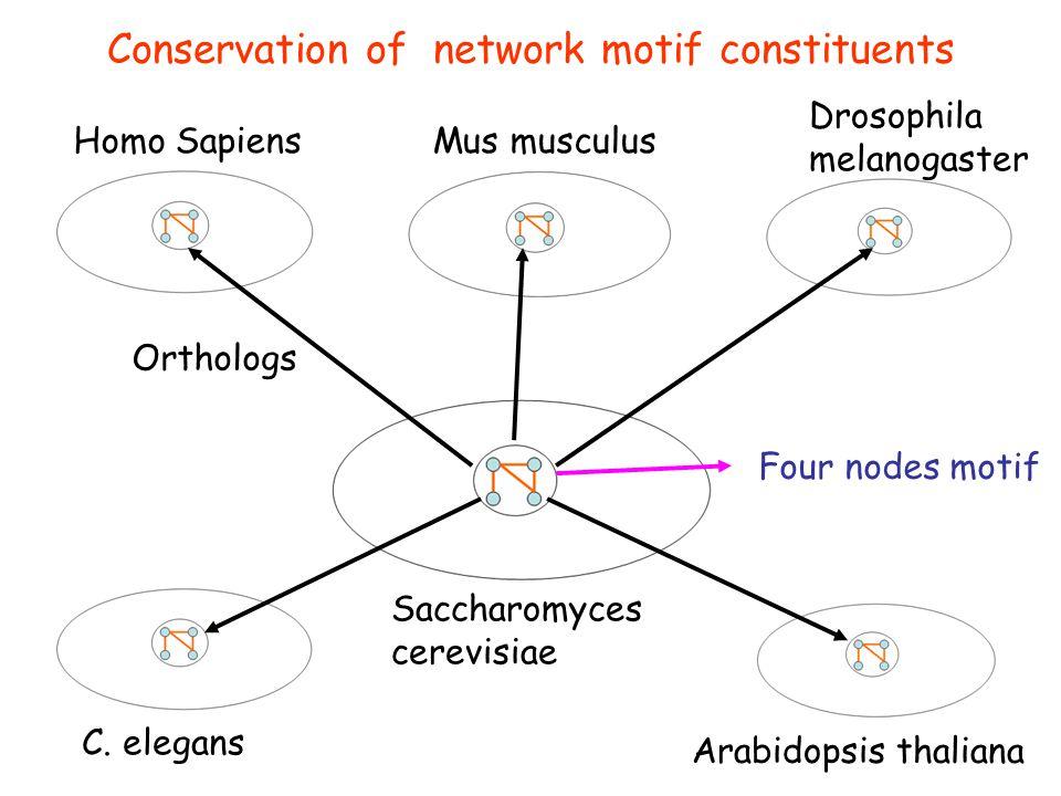 Conservation of network motif constituents Homo SapiensMus musculus Drosophila melanogaster C.