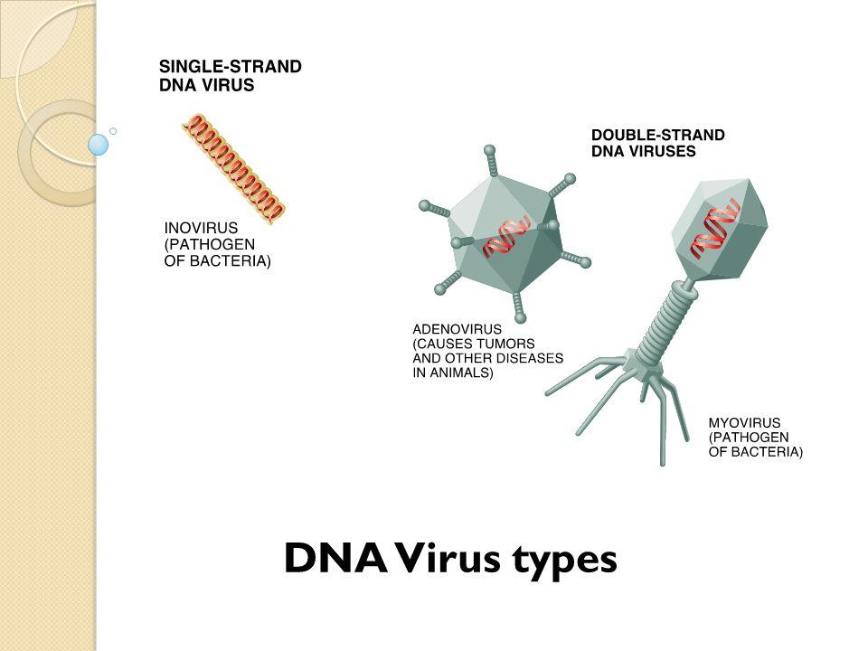 DNA Virus types