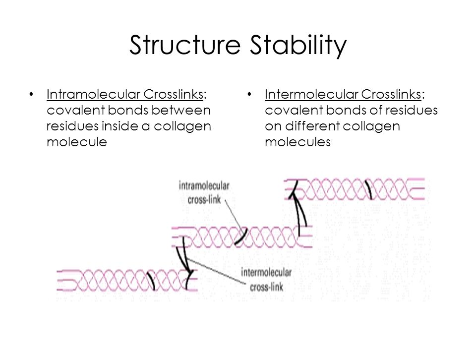 Structure Stability Intramolecular Crosslinks: covalent bonds between residues inside a collagen molecule Intermolecular Crosslinks: covalent bonds of