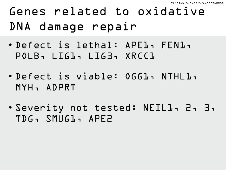 TÁMOP-4.1.2-08/1/A-2009-0011 Defect is lethal: APE1, FEN1, POLB, LIG1, LIG3, XRCC1 Defect is viable: OGG1, NTHL1, MYH, ADPRT Severity not tested: NEIL1, 2, 3, TDG, SMUG1, APE2 Genes related to oxidative DNA damage repair