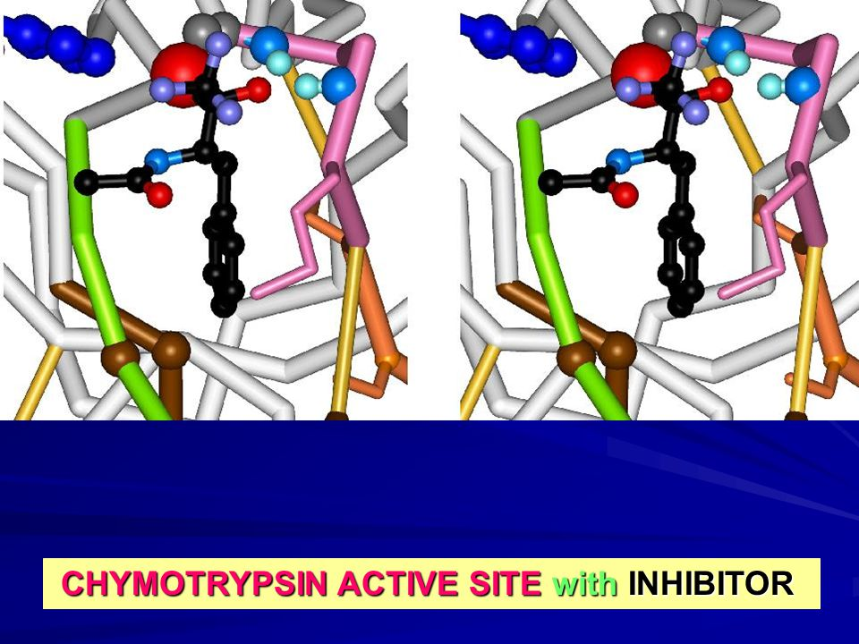 CHYMOTRYPSIN ACTIVE SITE with INHIBITOR CHYMOTRYPSIN ACTIVE SITE with INHIBITOR