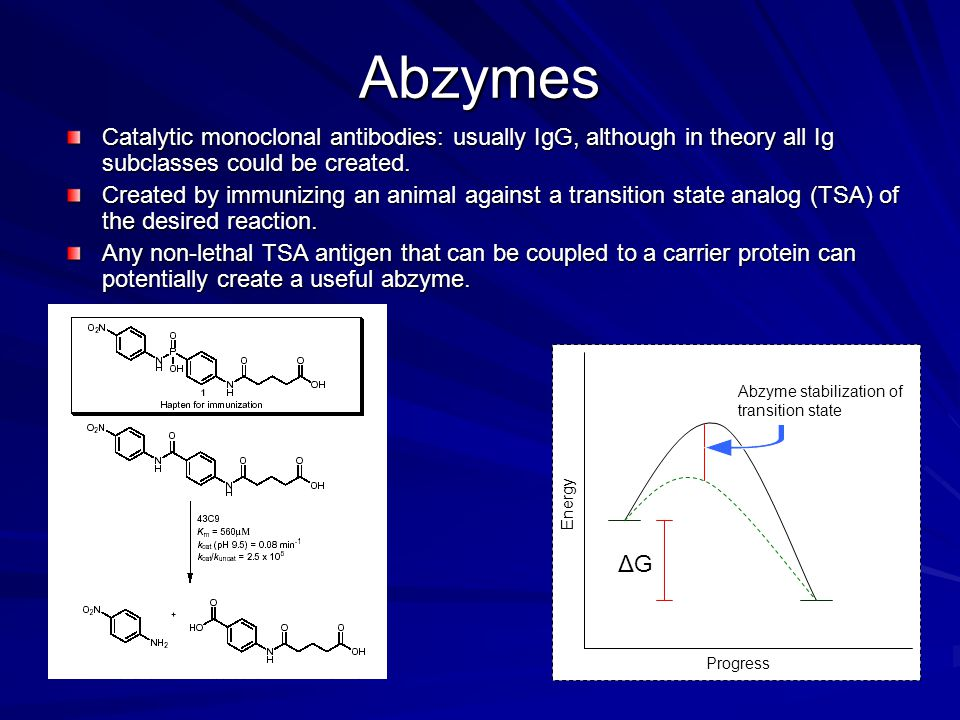 Abzymes Catalytic monoclonal antibodies: usually IgG, although in theory all Ig subclasses could be created.