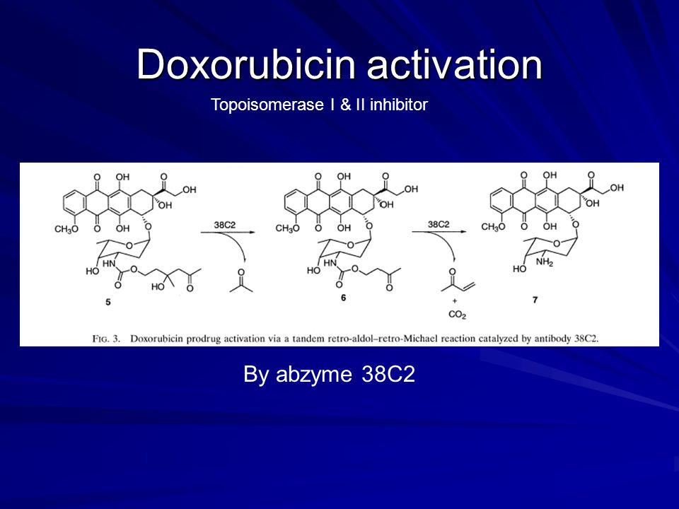 Doxorubicin activation By abzyme 38C2 Topoisomerase I & II inhibitor