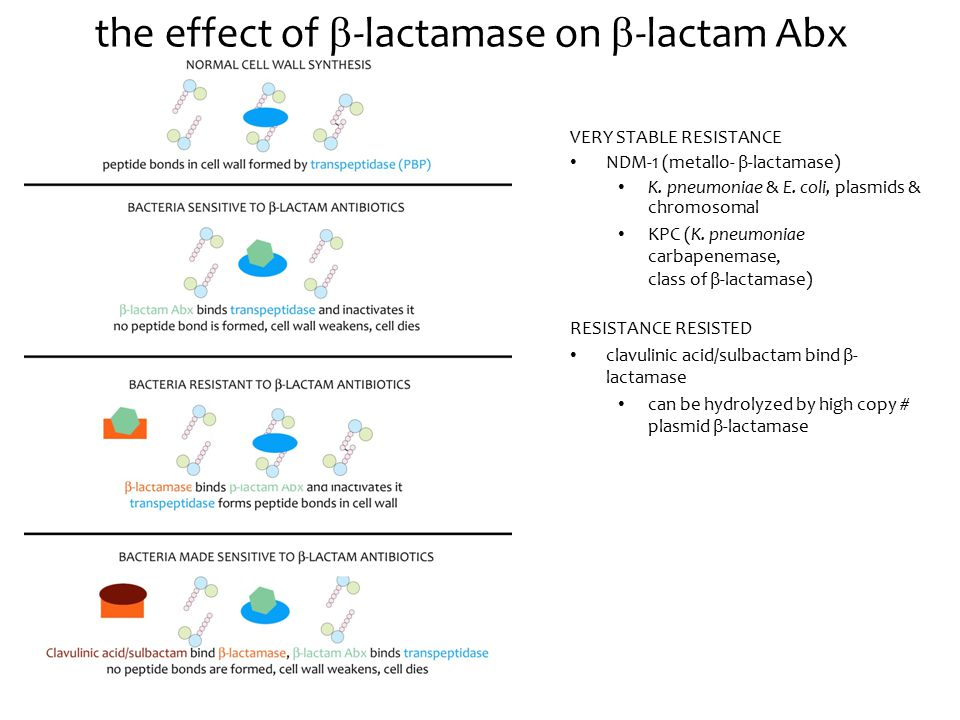 the effect of  -lactamase on  -lactam Abx VERY STABLE RESISTANCE NDM-1 (metallo-  -lactamase) K.
