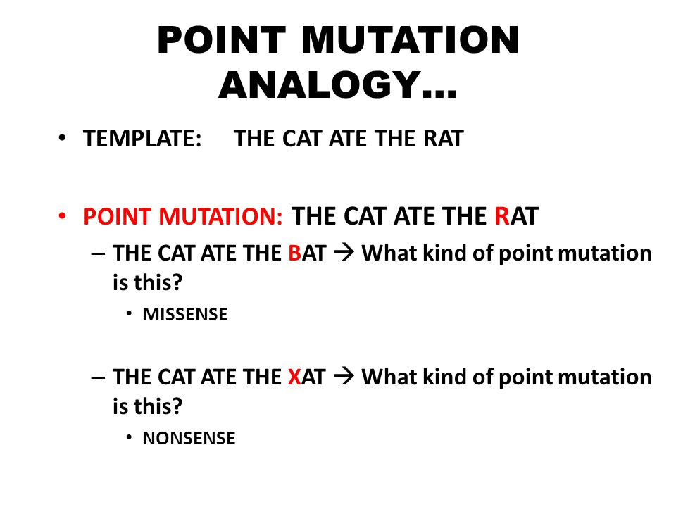 POINT MUTATION ANALOGY… TEMPLATE: THE CAT ATE THE RAT POINT MUTATION: THE CAT ATE THE RAT – THE CAT ATE THE BAT  What kind of point mutation is this.