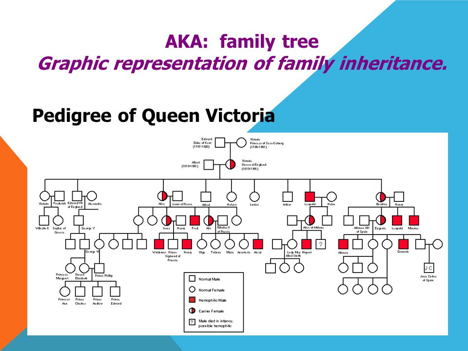 PEDIGREE ANALYSIS AKA: family tree Graphic representation of family inheritance.