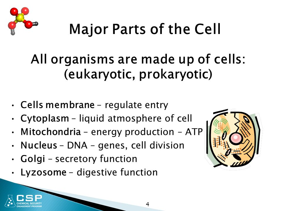 4 All organisms are made up of cells: (eukaryotic, prokaryotic) Cells membrane – regulate entry Cytoplasm – liquid atmosphere of cell Mitochondria – e