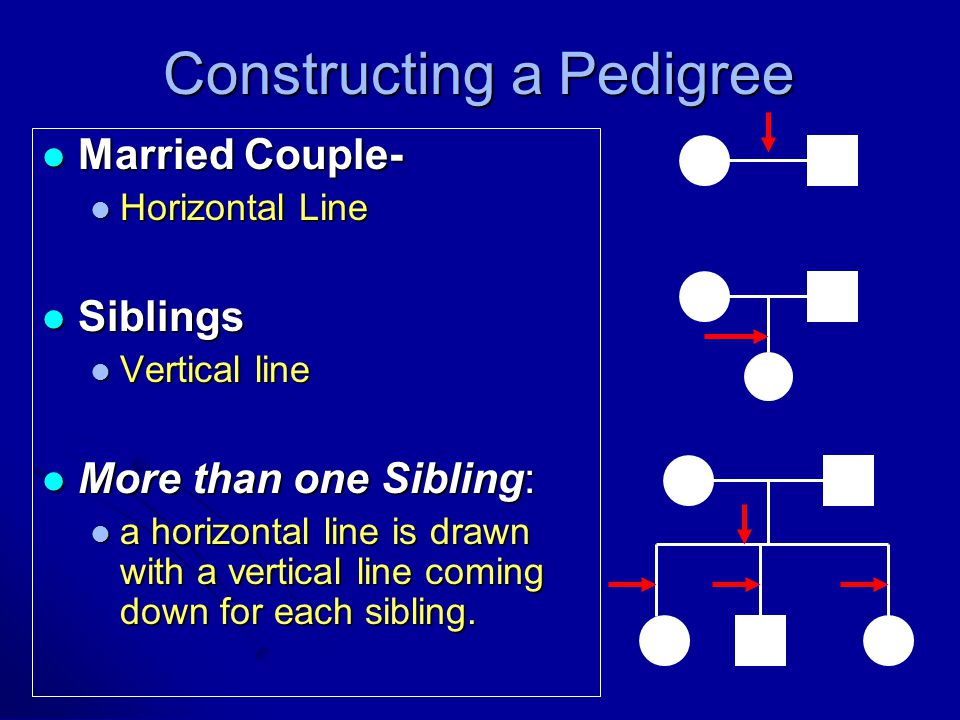 Married Couple- Married Couple- Horizontal Line Horizontal Line Siblings Siblings Vertical line Vertical line More than one Sibling: More than one Sibling: a horizontal line is drawn with a vertical line coming down for each sibling.