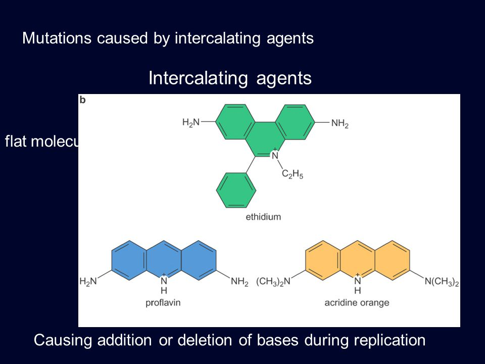 Mutations caused by intercalating agents Intercalating agents flat molecules Causing addition or deletion of bases during replication