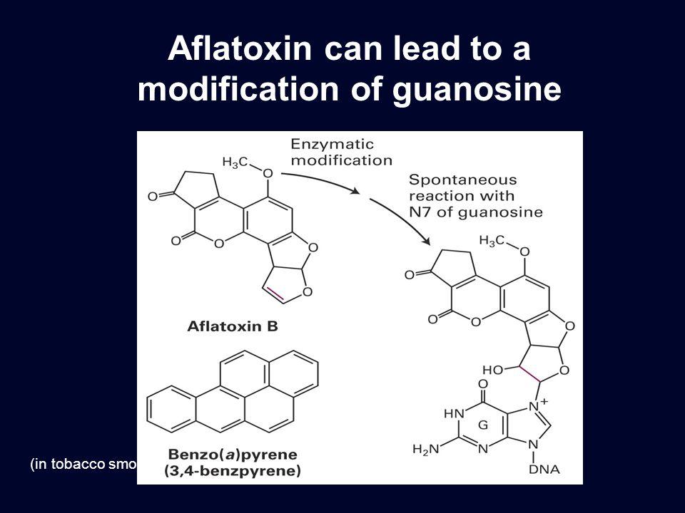 Aflatoxin can lead to a modification of guanosine (in tobacco smoke)